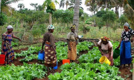 Creating a Market for Glyphosate through Development Policies