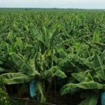 CREATION TIME   Second Week September  2018