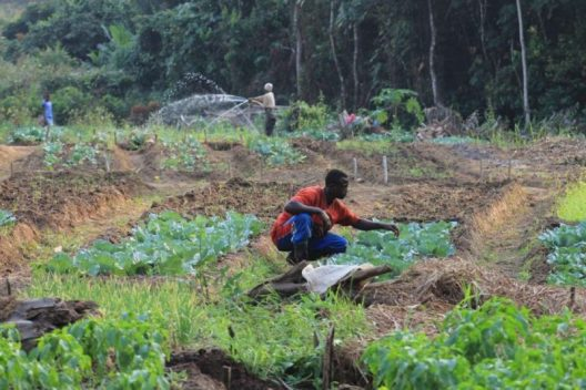 Sowing and tilling for Food Security