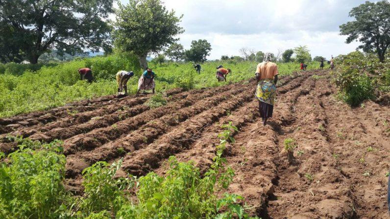 LONG-LASTING GLOBAL FOOD CRISIS