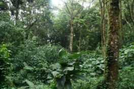 Forêts tropicales africaines, Europe et sécurité alimentaire