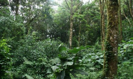 African Tropical Forests, Europe and Food Security
