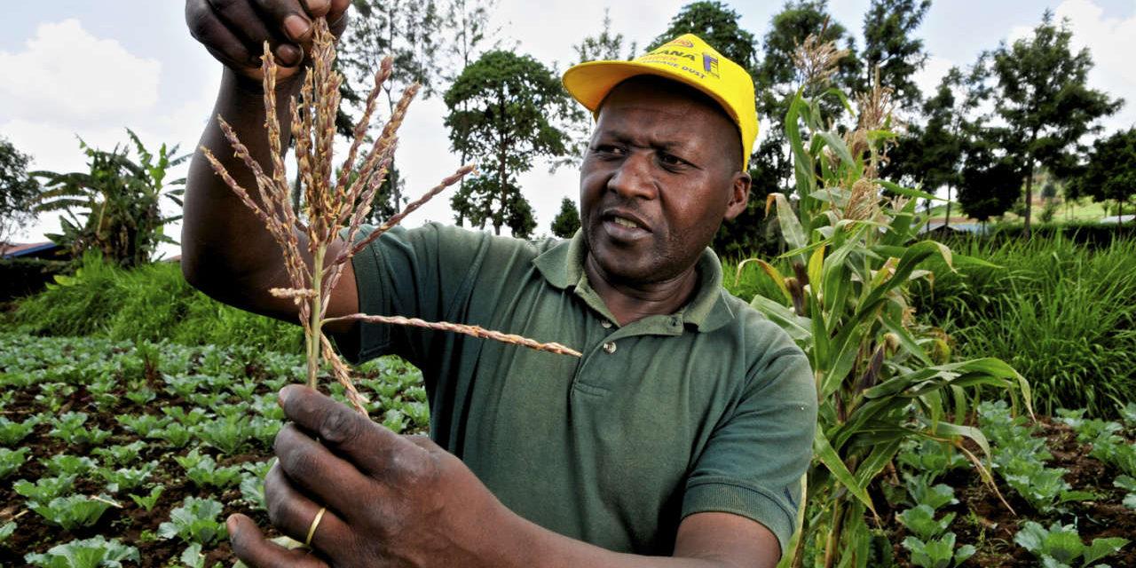 RÉFLEXIONS COMMUNES SUR LES QUESTIONS FONCIÈRES EN AFRIQUE