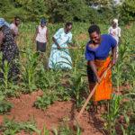 Au-delà de la rhétorique des investissements agricoles industriels en Afrique