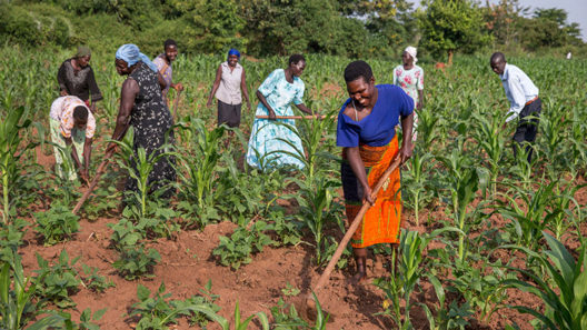 Beyond the Rhetoric of the Industrial Agricultural Investments in Africa