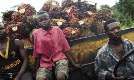 Communiqué de Presse: Tensions violentes dans les plantations de palmiers à huile de Feronia en RD Congo