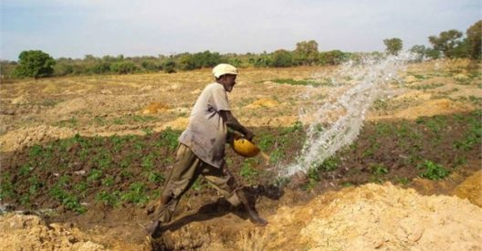 The Smallholder Farmers and the big level dream of Food Security