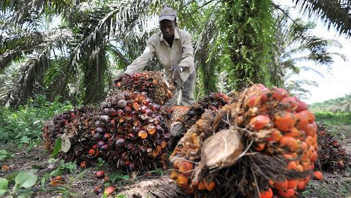 """Communiqué de presse: L'impact nocif du secteur de l'huile de palme une fois de plus dévoilé, dans une investigation sur des investissements – soi-disant – """"éthiques"""""""