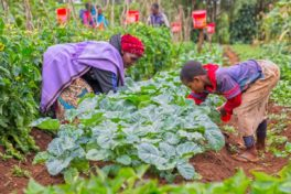 Urgency of Changing Food Systems