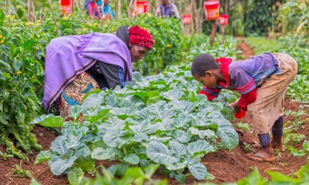 Urgence du changement des systèmes alimentaires