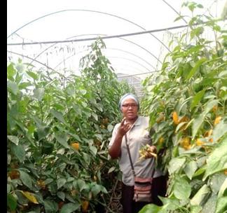 L'agriculture durable: une réussite des Filles de Marie et de Joseph en Ouganda