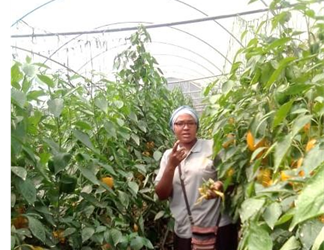 Sustainable agriculture: a success story from the Daughters of Mary and Joseph in Uganda
