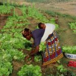 Towards a sustainable food system: the deplorable situation of women in Africa