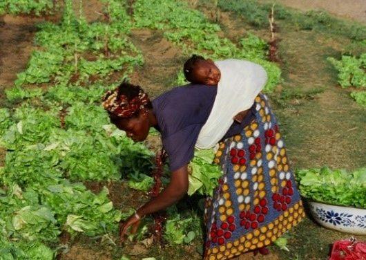 Vers un système alimentaire durable : la situation déplorable des agricultrices en Afrique