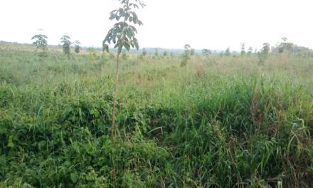 À quelle révolution verte l'AGRA conduit-elle l'Afrique ?